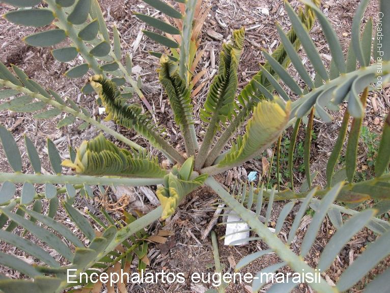 e.eugeneflush1.JPG